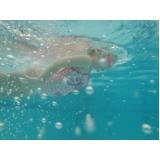 aula de natação infantil Centro